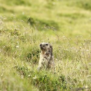 Bob la marmotte - Gni'gni gnigni gna (j'aime les carottes)