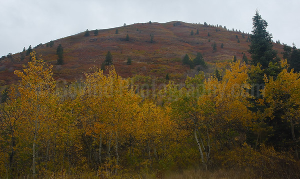 Fall in the Uinta Forest