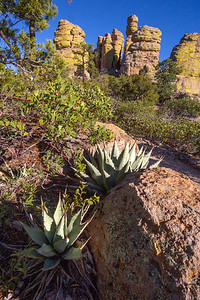 Parry's agave (Agave parryi), Heart of the Rocks trail, Chiricahua National Monument, Cochise County, Arizona
