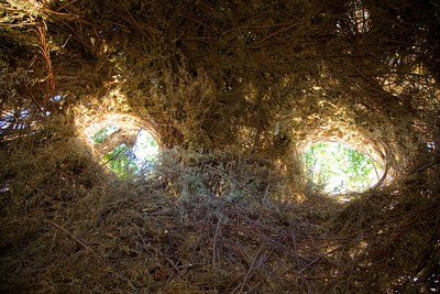 Patrick Dougherty at Bosque