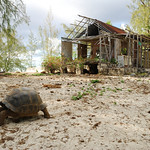 Tortoise and Old Settlement, Aldabra