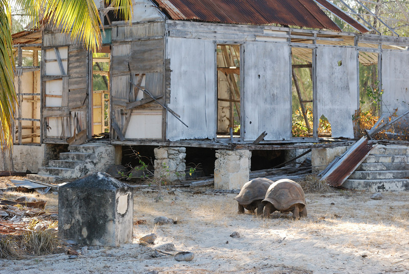 Old Settlement and tortoises, Aldabra