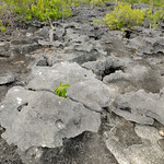 Rocky interior of Aldabra