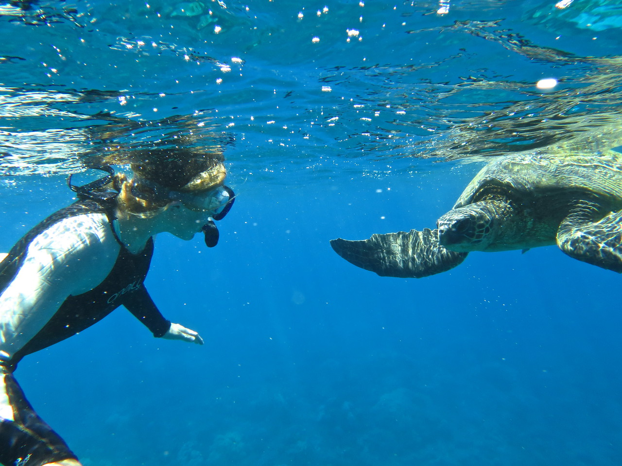 Claire (Bear) Maui Snorkel trip