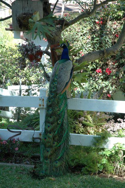 Front Yard birds