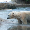 Polar Bear Shaking