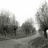 F2623<br /> De Menneweg richting Eendenkooi van Warmond. Tot aan de bocht in de verte is dit nog Sassenheims grondgebied. Links zien we de boerderij van Th. van der Plas.