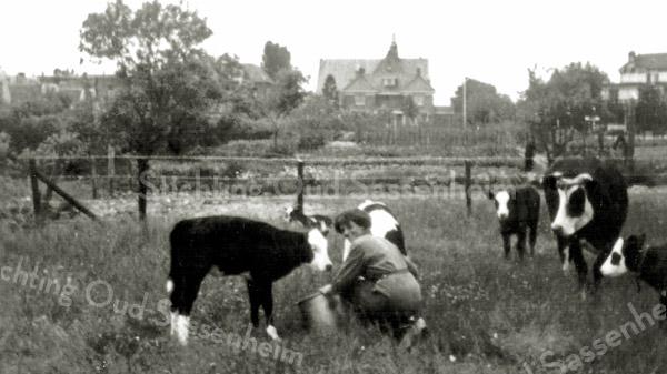 F3720<br /> Het boerenland achter villa Zonnehof op de plaats waar later de Parklaan aangelegd zou worden. Op de achtergrond in het midden zien we de Julianakerk met ervoor villa Swastika (nu Beukenhof). Rechts is een stukje van Casa Reale te zien.
