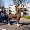 F1575 <br /> De viering van het 50-jarig bestaan van de Parklaan. Jan van der Geest zit met Geerie Bakker op de bok en ment zijn paard Markus. De dame op de voorgrond is Tinka Persoon. Op de achtergrond de huizen van Parkstate. Foto: 2002.