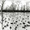 F0115 <br /> De eendenkooi achteraan de Menneweg. Foto is genomen door fotograaf Bonte in de winter van 1963. Zie verdere beschrijving bij F0114. Op deze foto is de eendenvijver afgebeeld, die uitloopt in vijf verschillende pijpen. Foto: 1963.
