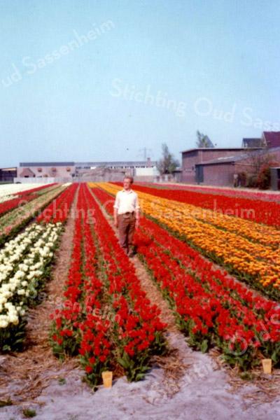 F3614<br /> Piet Kruik op het bollenland De Krocht tussen de tulpen van de fa.Wilbrink. Foto: ca 1970.