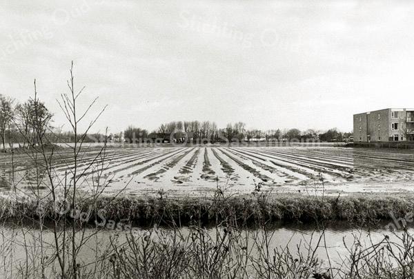 F2359<br /> 'Verzopen' bollenland, gezien vanaf de Teijlingerlaan. Op de achtergrond de boerderij van W. van Rijn. Rechts een deel van het verzorgingstehuis De Schutse. Foto: 2000.