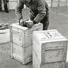 F0932h <br /> Personeel van Gebr. Van Zonneveld & Philippo, bezig met het verzendklaar maken van de kisten met bollen of knollen. Met stalen banden worden de kisten hermetisch afgesloten.