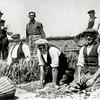 F0086 <br /> Bollen rooien op het land van Warnaar & Co op de tuin 'de Schans' aan de Eikenhorstlaan in Voorhout. V.l.n.r.: Hannes van Nieuwkoop, Willem van Zuijlen, onbekend,  Arend v.d. Heiden, Dirk Boekee (de vader van Wout Boekee) en op de achtergrond Willem Sluijmer (met pijp). Foto: ca. 1948.