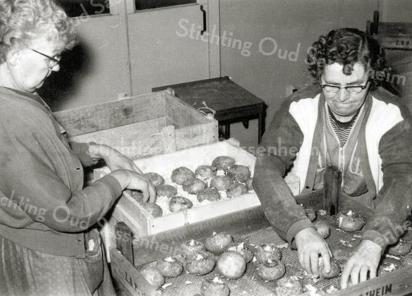F0932d <br /> Personeel van Gebr. Van Zonneveld & Philippo, werkend in de bollenschuur. De dames zijn bezig met het verpakken van (waarschijnlijk) begonia's. De knollen worden in kistjes gedaan en daarna afgedekt met houtkrullen. De kistjes worden daarna verzendklaar gemaakt voor afnemers in het buitenland.
