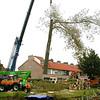 F2100c<br /> Het verwijderen van de Canadese populieren op de hoek van de Irissenstraat en de Hyacintenstraat op 6 oktober 2009. Vlak na de bouw van de huizen in 1960 zijn deze bomen geplant.