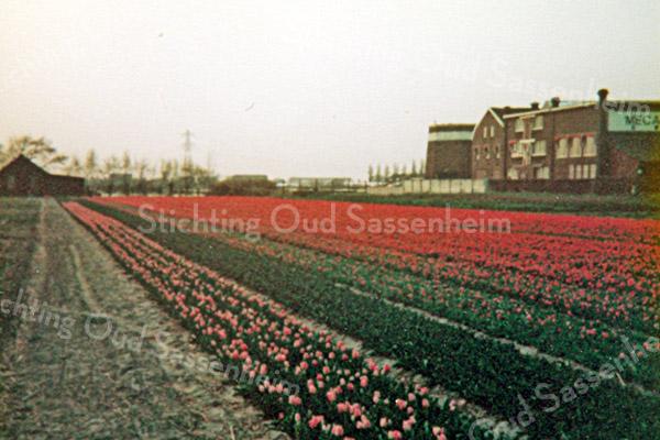 F2630<br /> Tulpenvelden met rechts de molenstomp van Speelman en het bedrijf Mecanorma-Polyvroom. Foto: 1978.