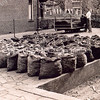 F1164b <br /> Henk van der Heiden bij de narcissenkokerij van Ab Helmus aan de Zandslootkade. Op de achtergrond de huizen van de Postwijkkade. Het naast gelegen pand links op de foto was van J. van der Geest. Het plein van Ab [Albert] Helmus is door hem zelf gestraat met gebroken tegels, die van de Postbrug kwamen. De Postbrug is in 1948 vernieuwd. In dat jaar is Ab Helmus met de narcissenkokerij begonnen.  Nadat het pand in 1959 was verbouwd tot het kantoor van A. Frijlink & Zn., is het in 1979 gesloopt. Nu is hier de Prins Clausstraat. Foto: 1950.