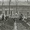 F2841<br /> Bollenwerkers op het land van H. Roozen & Zn. Op dit land werd later Huize Sassem gebouwd.