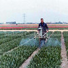 F3503<br /> Wim Kruik, hyacinthen spuiten op het land van de fa. Wilbrink. Foto: 1969