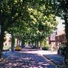 F0164 <br /> De Rusthofflaan, gezien vanaf de Menneweg in noordelijke richting. De kastanjebomen staan hier in volle bloei en lopen door tot aan de Kerklaan. Dit mag een van de mooiste lanen van Sassenheim worden genoemd. Foto: 1996.