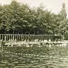 F3948<br /> Het voormalige zwembad aan de Willem Warnaarlaan