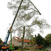 F2100b<br /> Het verwijderen van de Canadese populieren op de hoek van de Irissenstraat en de Hyacintenstraat op 6 oktober 2009. Vlak na de bouw van de huizen in 1960 zijn deze bomen geplant.