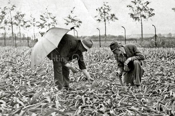 F1252 <br /> Ziekzoeken. Daarbij zoeken de mannen naar vlekken op de bladeren. Die zijn in de schaduw het beste te zien – vandaar de paraplu.