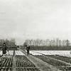 F0612 <br /> Bollenland achter het huis van Antoon v.d. Voort. Dat land liep achter diens woonhuis aan Hoofdstraat 169 door tot aan de Wilhelminalaan. Links mevr. J. v.d. Voort met Clasien (Ina, geb. in 1928). In het midden A. v.d. Voort, dan Leo (geb. in 1926) en rechts Dick (geb. in 1924). Het woonhuis is in 1980 gesloopt. Foto: 1929-1930.