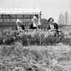 F4006b <br /> Baartman & Koning organiseerde in de jaren '50 tentoonstellingen in de V.S. Drie meisje van het kantoor dienden als fotomodel. Vlnr: Lies van Leeuwen; Aleida van Teylingen en Hennie van der Voort. Foto: 1953.