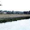 F0303 <br /> Over het bollenland van P. Blom zien we de twee rijen huizen  van de oude Burchtstraat in het midden van de foto. Links daarvan de nieuwe bebouwing, die bij het huis Vredesteyn behoort als huisvesting voor gehandicapten. Verder naar links de achterkant van de bebouwing langs de Hoofdstraat, evenals rechts op de foto en daar bovenuit de kantoorflat van Schulte & Lestraden aan de Parklaan. Op de voorgrond de sloot langs de Teijlingerlaan en het stuk grond waar later De Schutse is gebouwd; sinds 2015 staat hier SassemBourg. De Burchtstraat is in 1990 gesloopt. Foto: begin jaren '80.