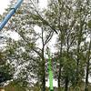 F2100a<br /> Het verwijderen van de Canadese populieren op de hoek van de Irissenstraat en de Hyacintenstraat op 6 oktober 2009. Vlak na de bouw van de huizen in 1960 zijn deze bomen geplant.