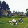 F0090 <br /> De boerderij van Wim van Rijn, gezien vanaf de Carolus Clusiuslaan. Foto: ca. 1975.