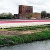 F0450 <br /> De Ruïne van Teylingen in het voorjaar temidden van bloeiende bollenvelden. De waterburcht, een verdedigingswerk uit het begin van de 13e eeuw, heeft een donjon en een ringmuur met een doorsnede van 37 m. Na het geslacht Van Teijlingen kwam het slot aan de graven van Holland. Is diverse keren verwoest en herbouwd, maar na de brand van 1676 is het een ruïne gebleven. Rechts is nog de bollenschuur te zien van de Gebr. Bergman, later in gebruik genomen door de gebroeders Reckman. Foto: 1998.