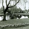 F2473<br /> Deze vijver tussen Charbonlaan/Wilhelminalaan/Koningspark werd vroeger de 'Buitenbeek' genoemd. Sinds 1980 wordt de vijver opgesierd door de fontein, een kunstwerk van architect De Greeff. Zie ook het Stratenboek van Sassenheim, pag. 182. Foto: 2001.