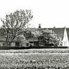 F1329b <br /> Zijaanzicht van boerderij Wiltrijk, Hoofdstraat 57. Hier woonde de fam. Homan. Op de voorgrond is nog bollenland van de fam. Zwetsloot te zien.
