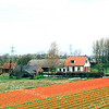 F0501<br /> De boerderij van W. van Rijn aan de Hoofdstraat, temidden van bloeiende bollenvelden. De boerderij is ca. 300 jaar oud. Bij de renovatie van het voorste woongedeelte heeft men kunnen vaststellen, dat het pand niet gefundeerd is omdat het op een zandplaat staat. Inmiddels is het gebied achter de boerderij in de loop der jaren volgebouwd en is de wijk Overteylingen ontstaan, mét het nieuwe woon- en servicecentrum SassemBourg. Foto: 1999