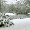 F2477<br /> Park Rusthoff, gelegen in het centrum van Sassenheim in wintertooi. Foto: 2001
