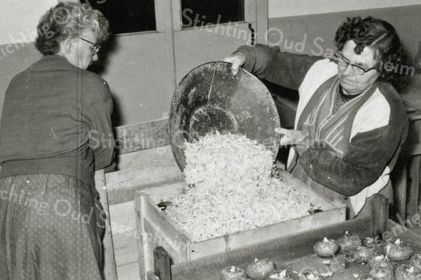 F0932a <br /> Personeel van Gebr. Van Zonneveld & Philippo, werkend in de bollenschuur. De dames zijn bezig met het verpakken van (waarschijnlijk) begonia's. De knollen worden in kistjes gedaan en - zo te zien - afgedekt met houtkrullen. De kistjes worden daarna verzendklaar gemaakt voor afnemers in het buitenland.