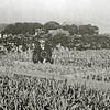F3830<br /> Nicolaas Dames op zijn kwekerij aan de Heereweg te Lisse, nabij het Mallegat.