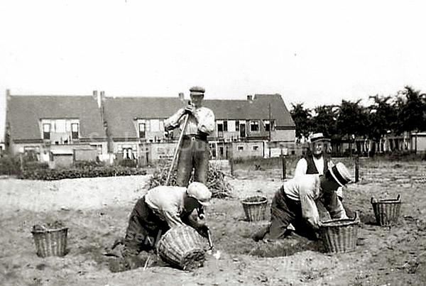 F2405<br /> Bollenrooien op het land van Van der Voort (hoek Menneweg/Rusthofflaan). Rechts zien we achter de bomen de huizen op de Rusthofflaan. Op de achtergrond de achterzijde van de huizen aan de J.P. Gouverneurlaan (o.a 'Us Wente'). Op de foto staan Chris van der Voort, Han van der Voort, Bert van der Voort en een onbekende. Op deze plaats kwam later o.m. de werk- en opslagplaats van de kistenfabriek van Matze. Foto: ca. 1934.