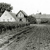 F1329a <br /> Links boerderij Wiltrijk op Hoofdstraat 57; hier woonde de fam. Homan. Ernaast het woonhuis van de fam. Zwetsloot en rechts de stal. De boerderij is geheel gerestaureerd.