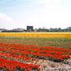 F1637 <br /> De foto is genomen vanaf de Frank van Borselenlaan ('Pukkieslaan'). De ruïne van Teylingen in het midden en de bebouwing van de Horsten aan de rechter kant. Foto: 2001.