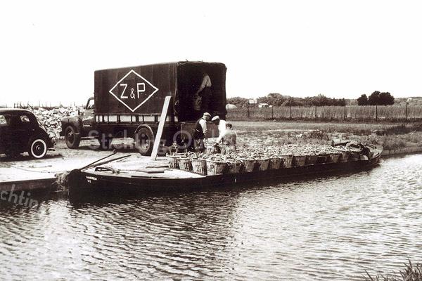 F1180 <br /> De gerooide bollen worden per schuit afgevoerd en per vrachtwagen naar de bollenschuur gebracht. De auto en de manden vermelden duidelijk Z & P, dat staat voor  Gebr. Van Zonneveld & Philippo N.V.