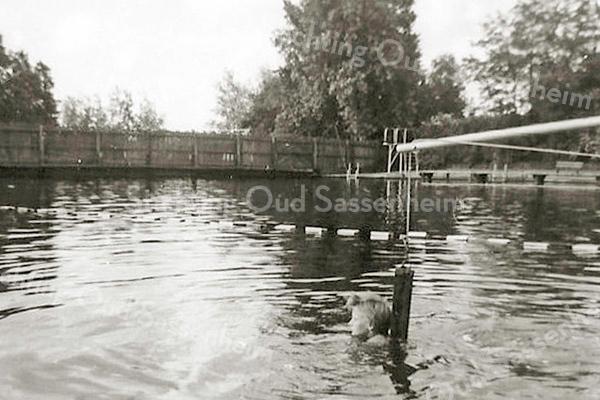 F3065<br /> Om goed te leren zwemmen waren er hulpmiddelen beschikbaar zoals hier zwemonderricht met een hengel, waaraan een lus bevestigd is die hoger of lager in het water kon zakken. Dit is een opname van de jongens- of herenkant met op de achtergrond de afscheiding tussen het zwembad en Sassenheimervaart.