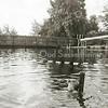 F3065<br /> Zwemles in het oude zwembad, gelegen aan het eind van de Willem Warnaarlaan. Om goed te leren zwemmen waren er hulpmiddelen beschikbaar zoals deze hengel, waaraan een lus bevestigd is die hoger of lager in het water kon zakken. Dit is een opname van de jongens- of herenkant met op de achtergrond het afscheidingshek tussen het zwembad en de Leede, die uitkomt op de Sassenheimervaart.
