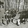 F3301<br /> Simon Verkleij met koeien bij de boerderij de Bonte Koe aan de Rijksstraatweg.