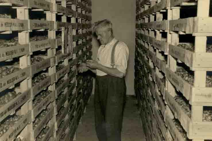 Fcs0131<br /> Antoon Knegt tussen de z.g. potenbakken met bollen in de bollenschuur van Fred de Meulder