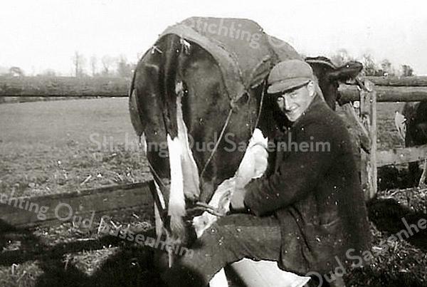 F2407<br /> Chris van der Voort aan het melken in de Kooipolder (1937) aan het eind van de Menneweg. Op de achtergrond is de eendenkooi van Warmond te zien.