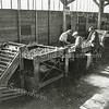 F0932j<br /> Personeel van Gebr. Van Zonneveld & Philippo aan het werk in de bollenschuur. Ze staan aan de sorteerband voor ziekzoeken en beoordelen van bollen op kwaliteit